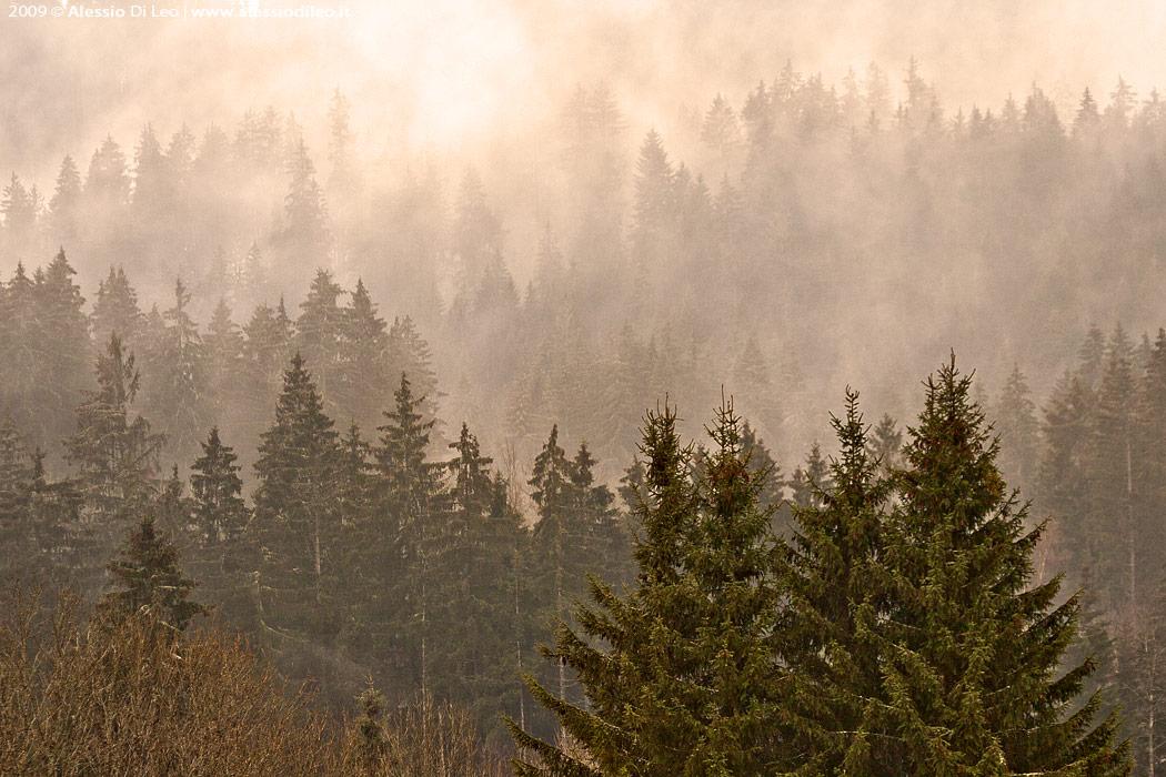 Bayerischer wald foresta