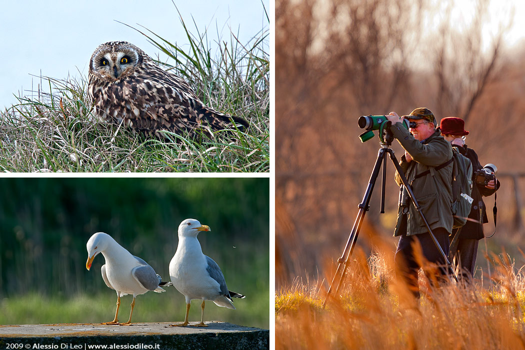 Saline di Comacchio Birdwatching