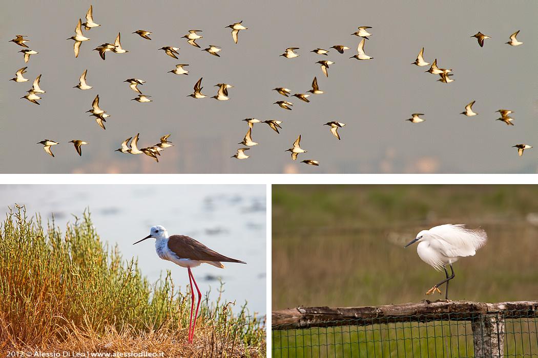Comacchio birdwatching