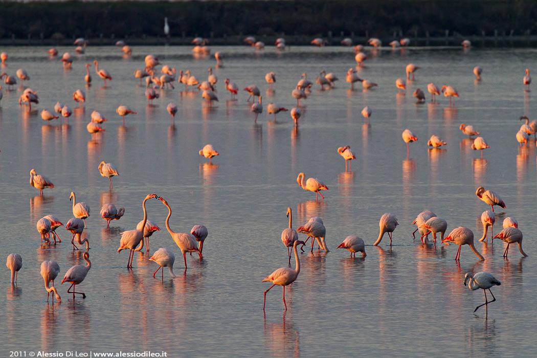 Saline di Comacchio fenicotteri rosa