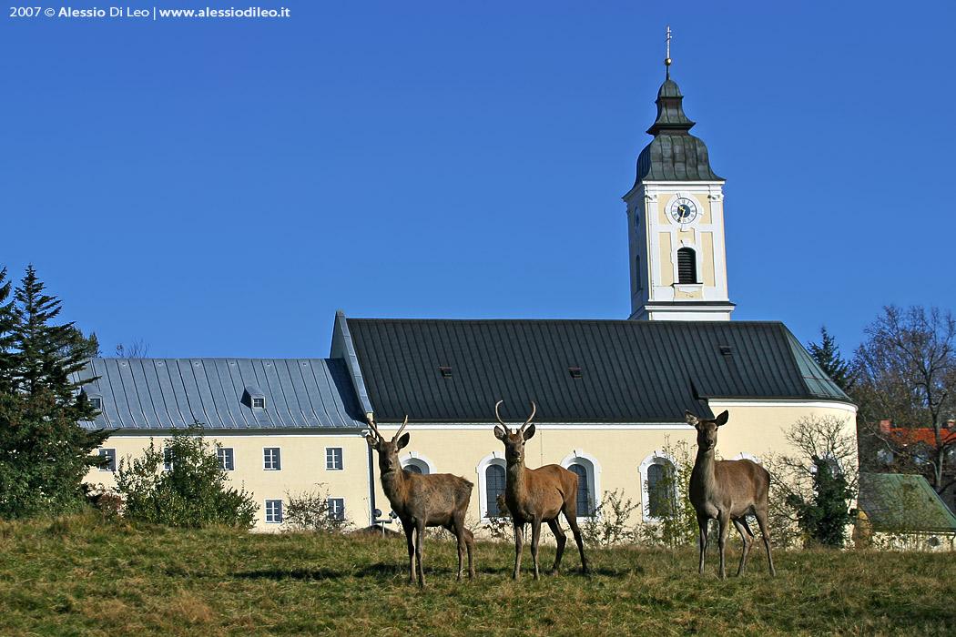 Sankt oswald