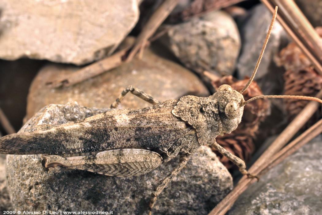 L'incredibile e variegato mimetismo degli insetti tra cacciatori e prede