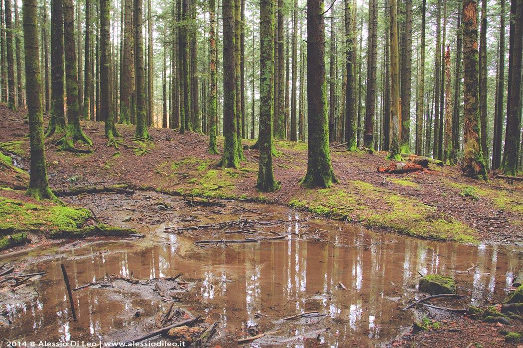 Eremo di Camaldoli bosco