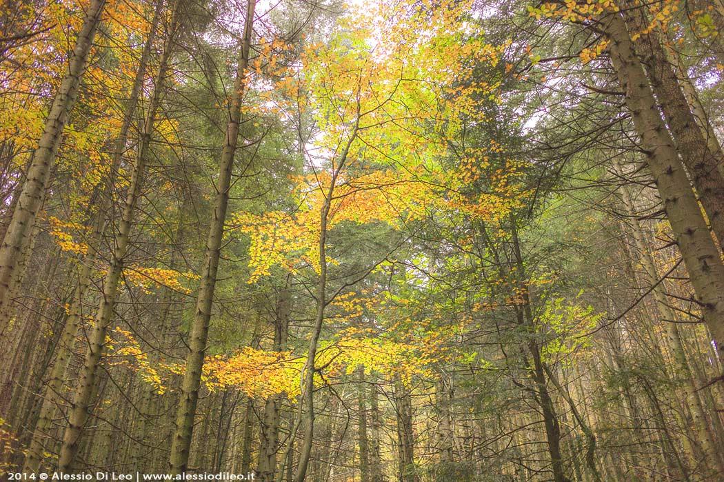 Eremo di Camaldoli foresta