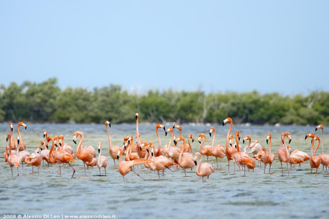 Rio Lagartos e la grande colonia di fenicotteri rosa