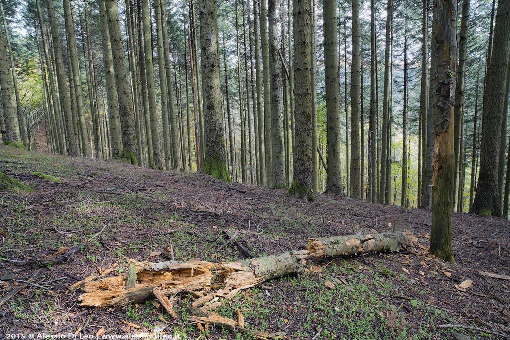 Foresta Badia Prataglia
