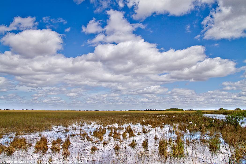 Everglades tamiami trail