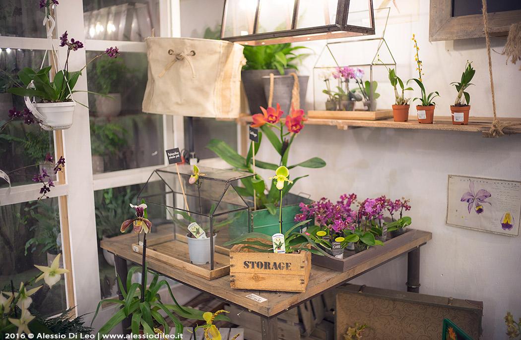 Esposizione delle orchidee