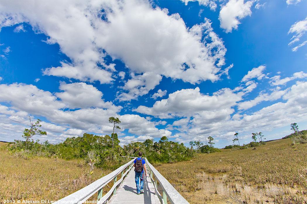 Everglades prateria