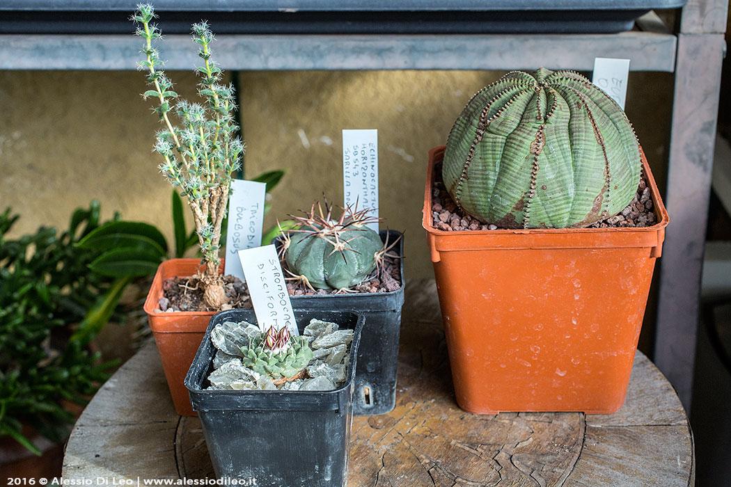 Nuovi acquisti cactus