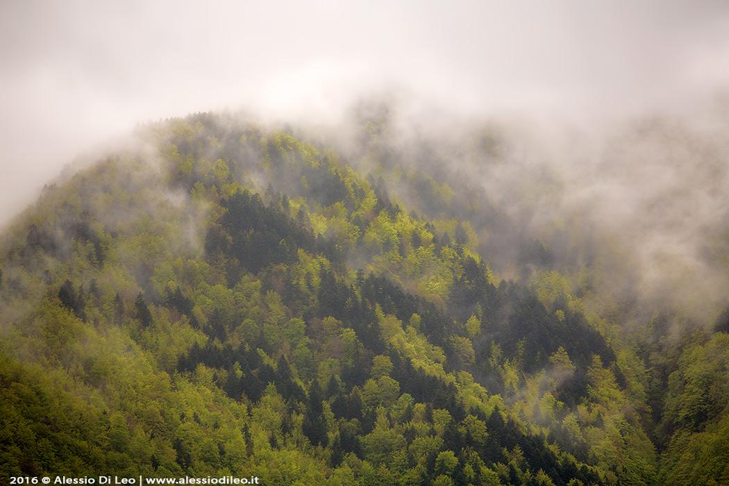 Campigna foreste casentinesi