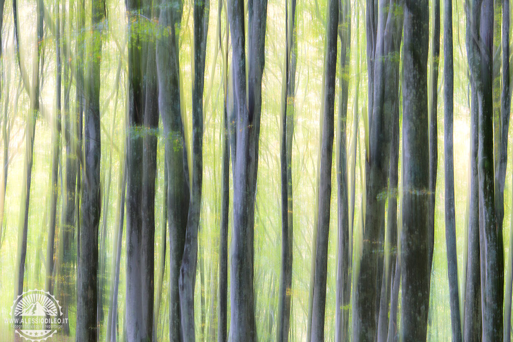 fangacci bosco