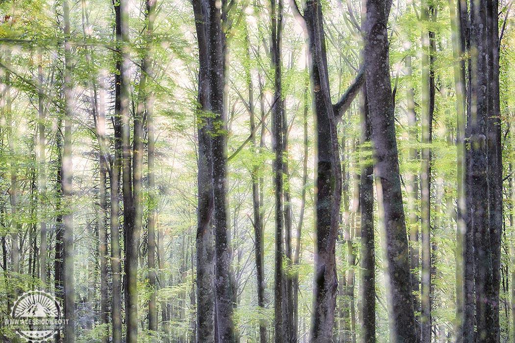 fangacci foliage