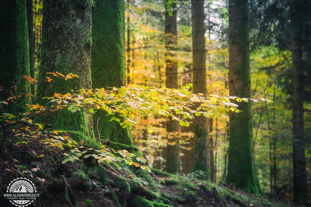 fotografare autunno campigna