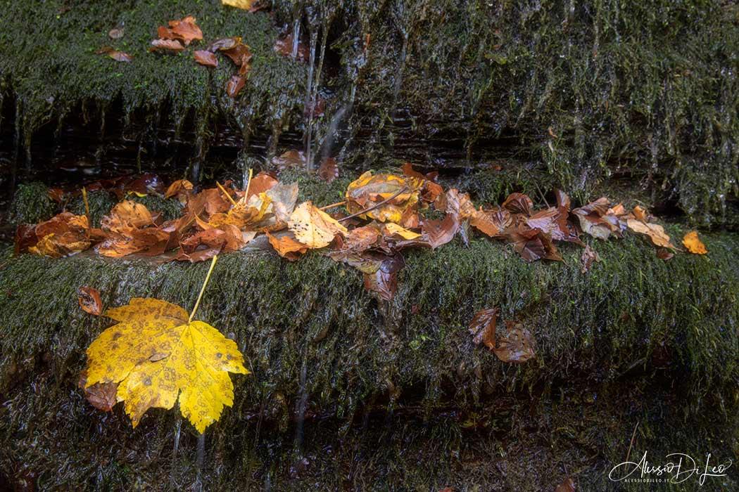 Fotografare in autunno