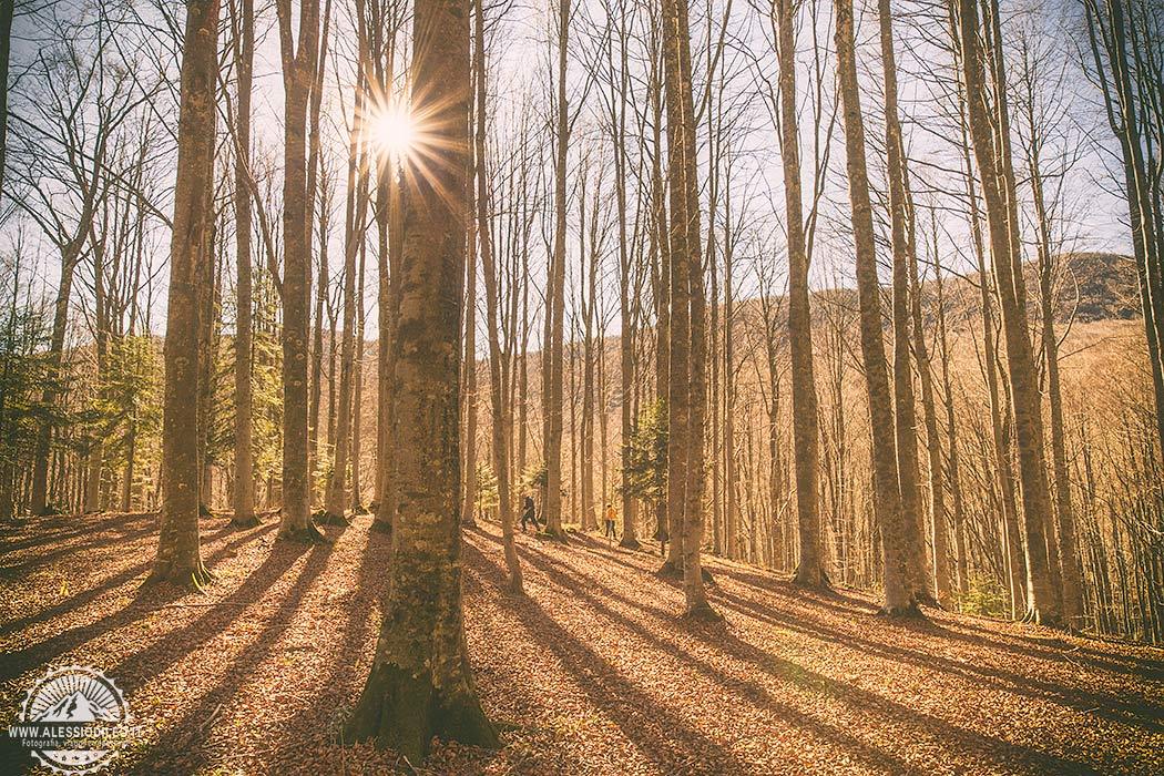 Fotografare in autunno nelle Foreste Casentinesi