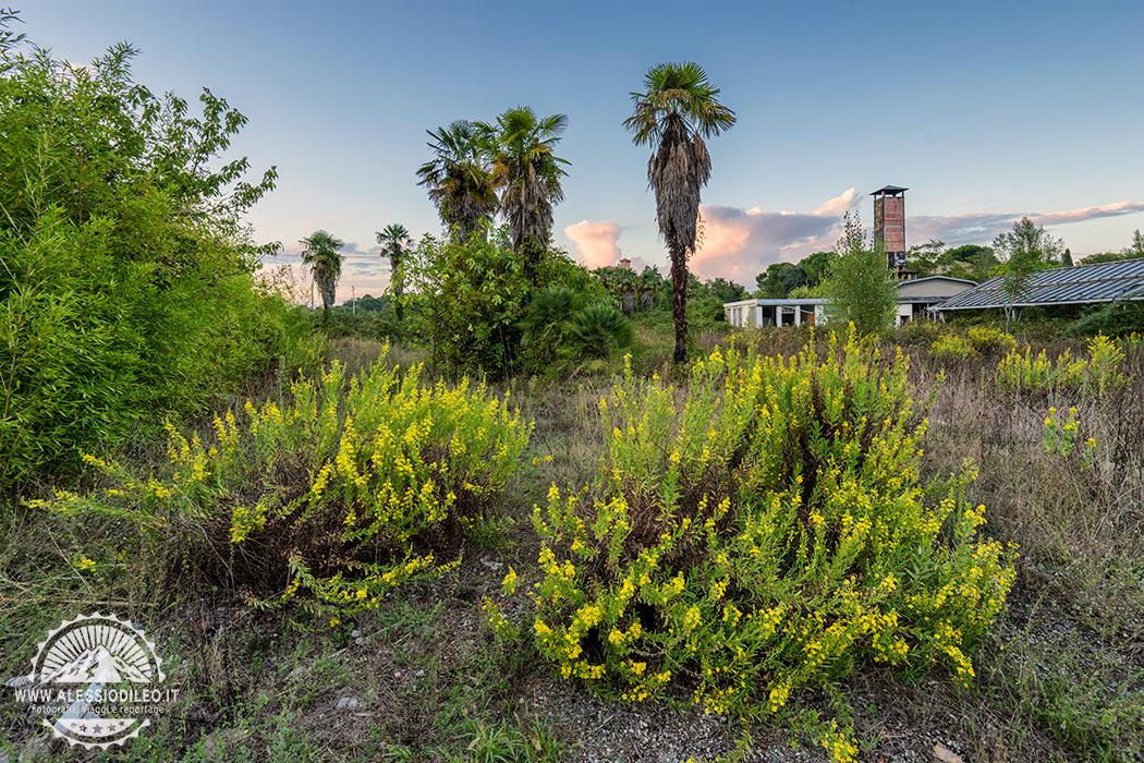 La Serra Pan Orchids invasa dalla vegetazione urbex