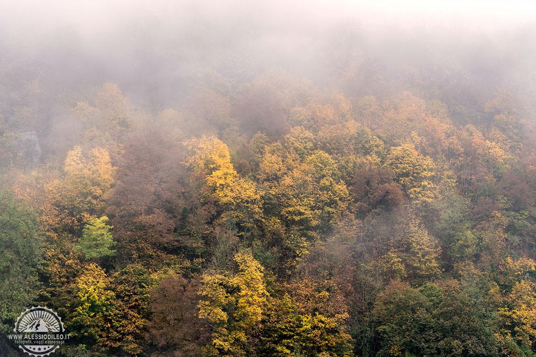 bayerischer wald National Park