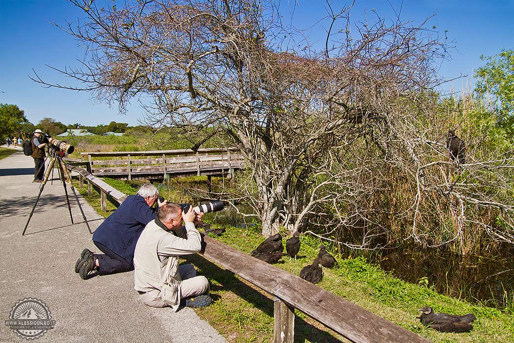 Workshop anhinga trail