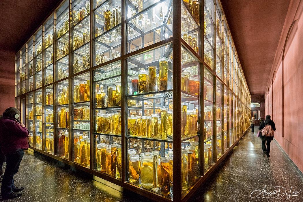 Berlino museo storia naturale