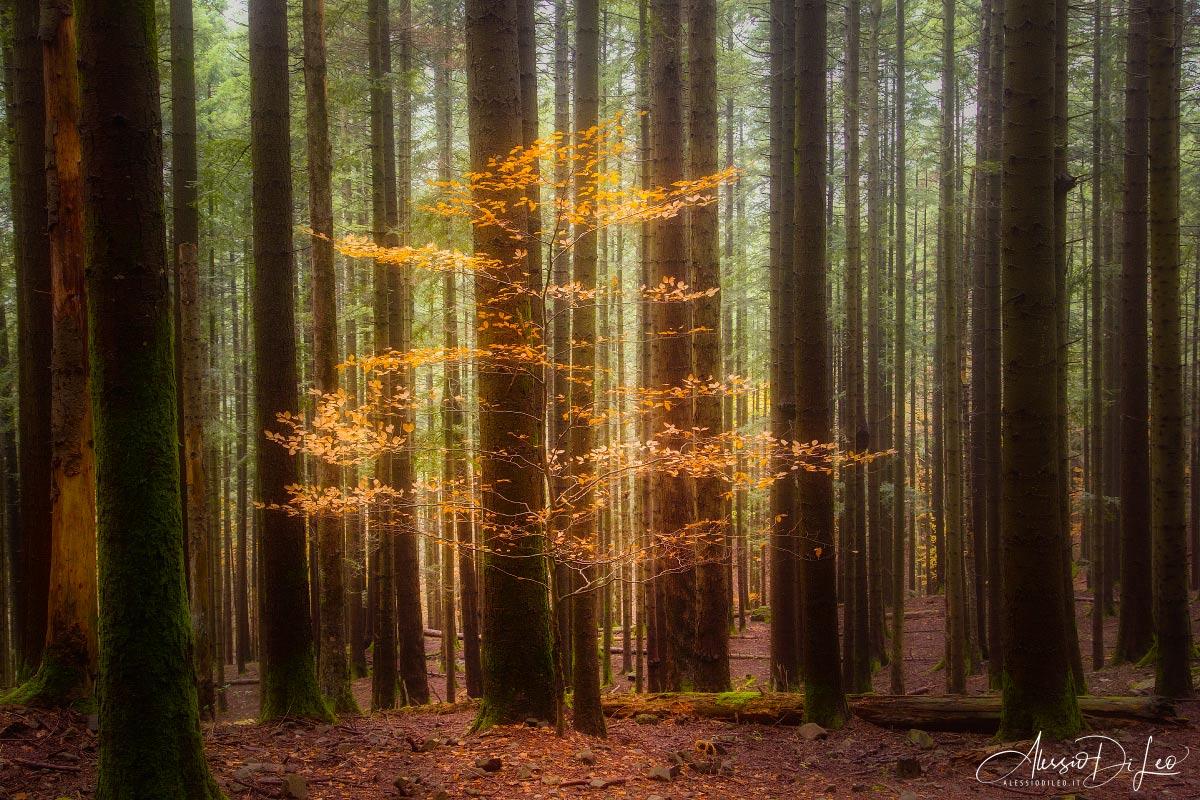 Alessio di leo fotografia naturalistica