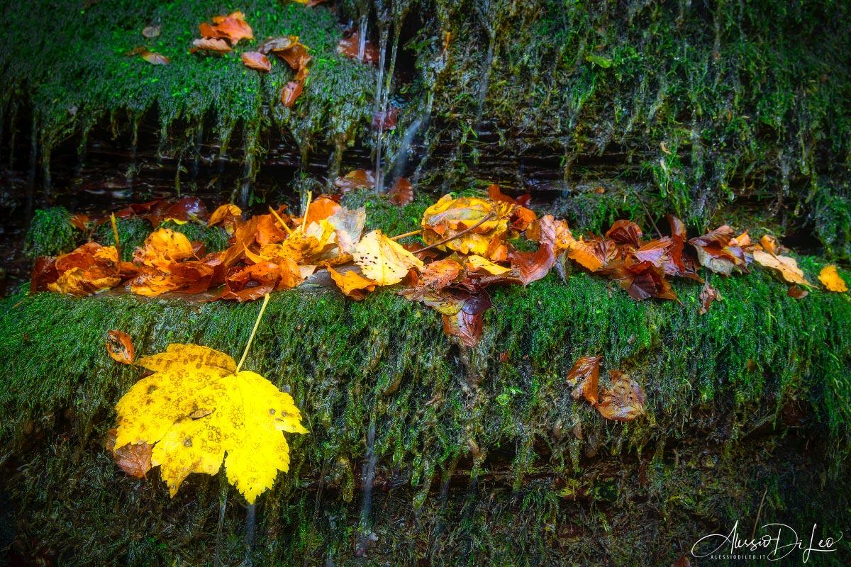 Colori autunno