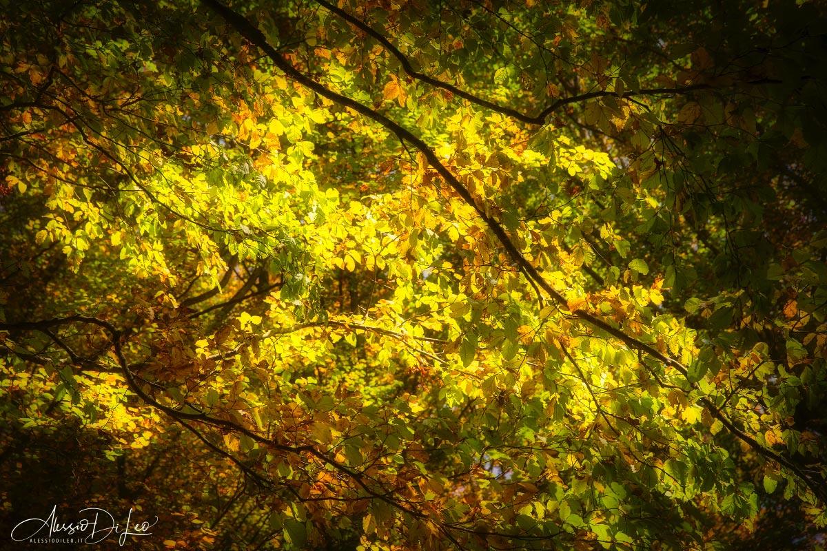 Foliage camaldoli