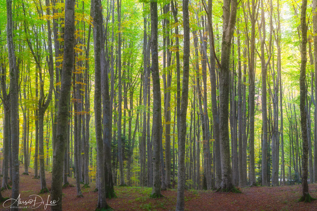 Foliage italia