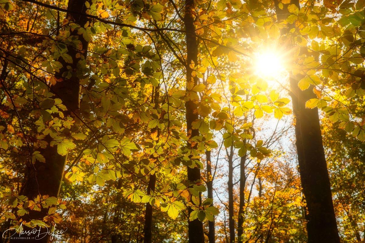 Foliage significato