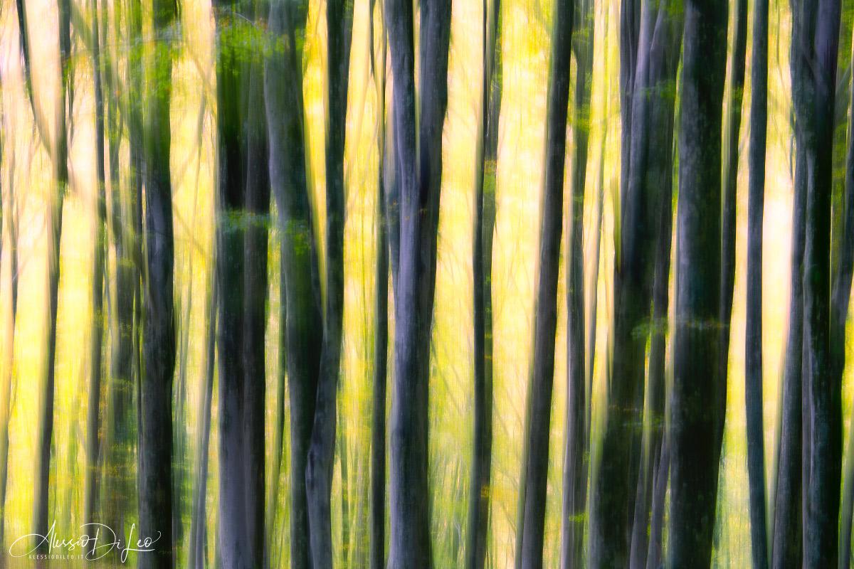Foresta fangacci