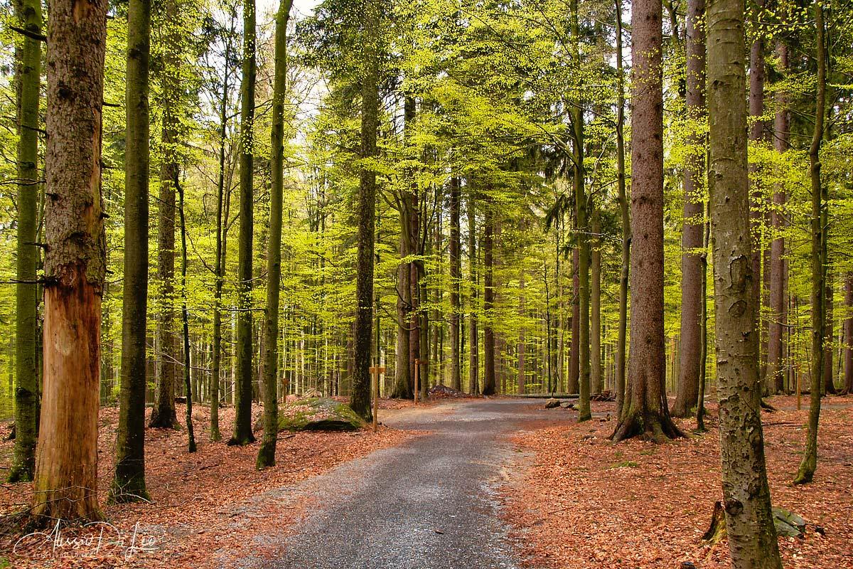 Bayerischer wald germania