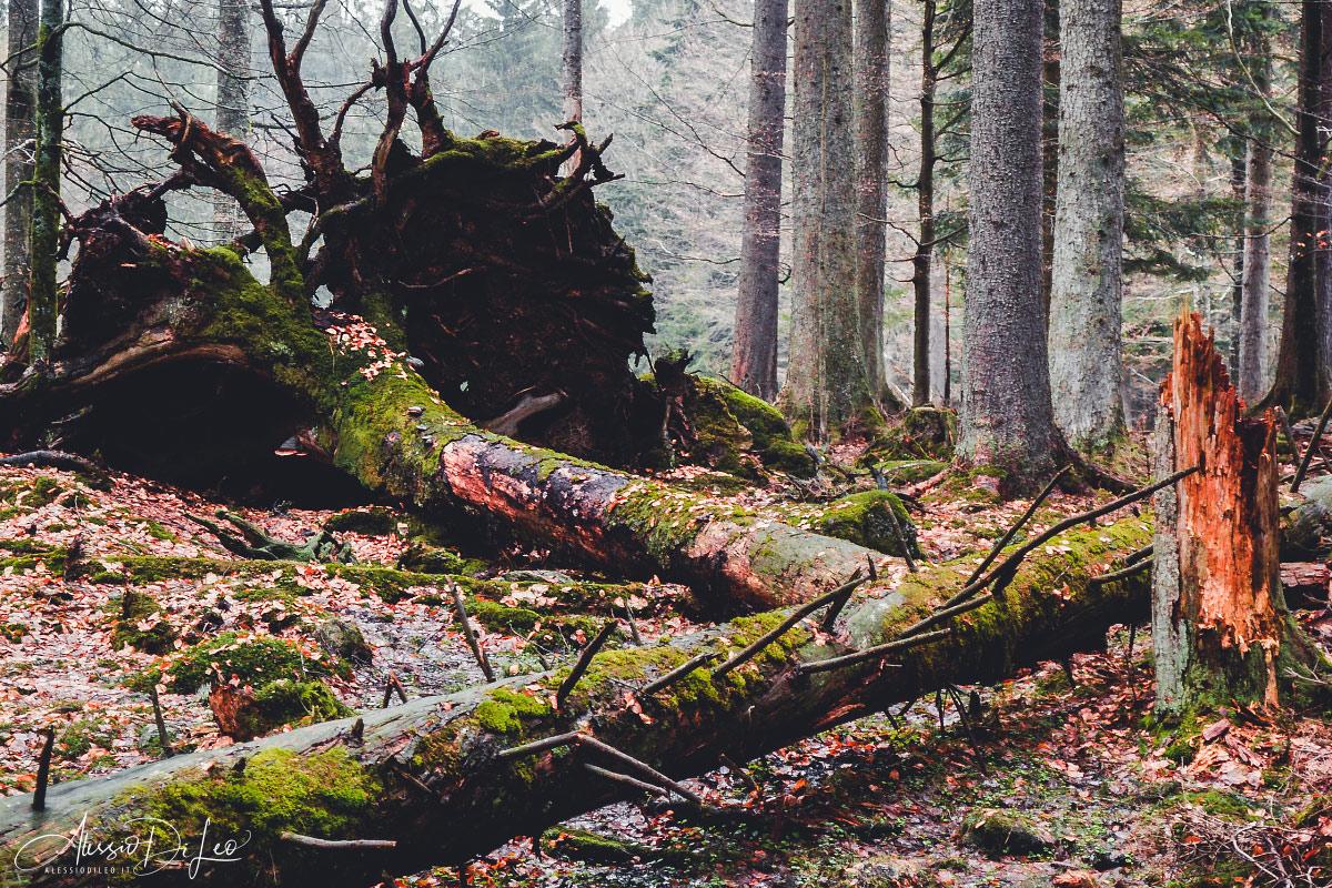 Bayerischer wald national park germany