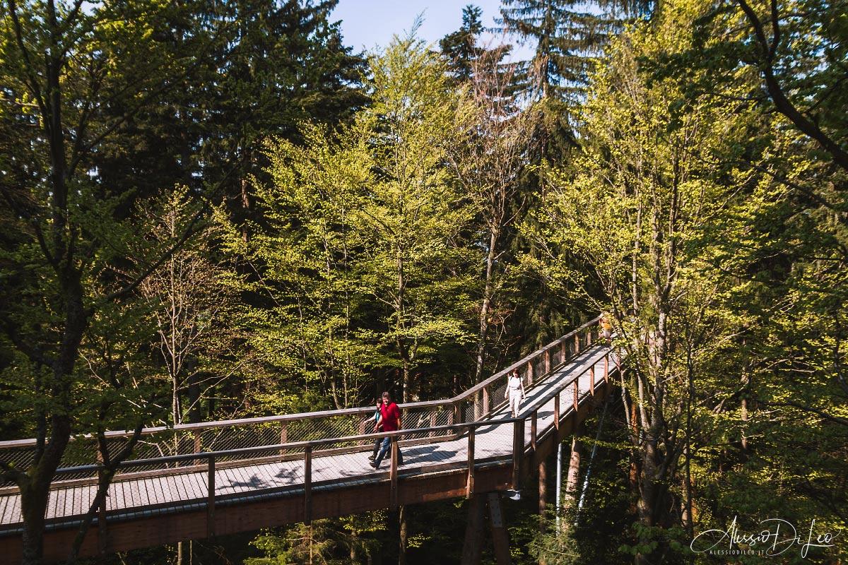 Bayerischer wald tree top walk
