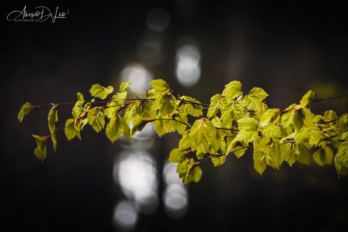 Foresta Bayerischer wald