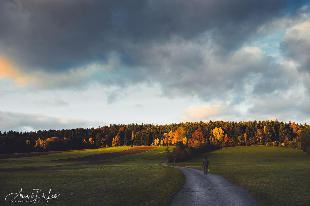 Foresta bavarese