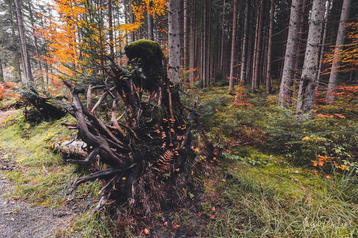 Parco nazionale della foresta bavarese