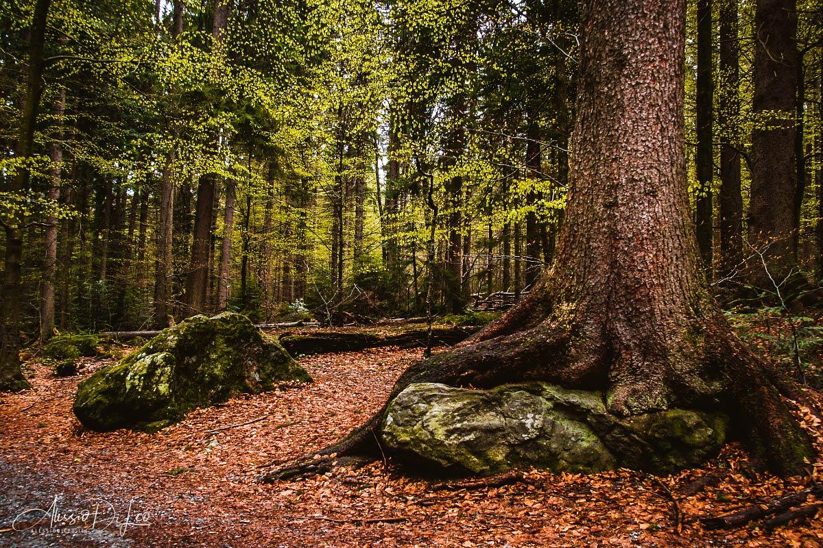 bayerischer wald nationalpark