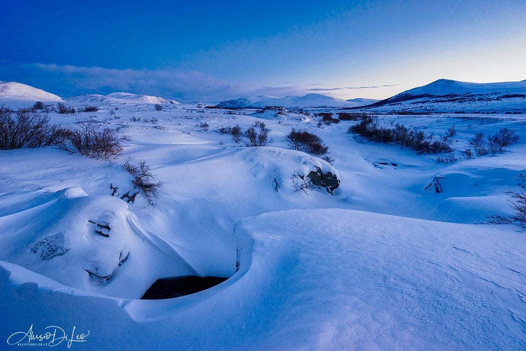 Parco nazionale dovrefjell