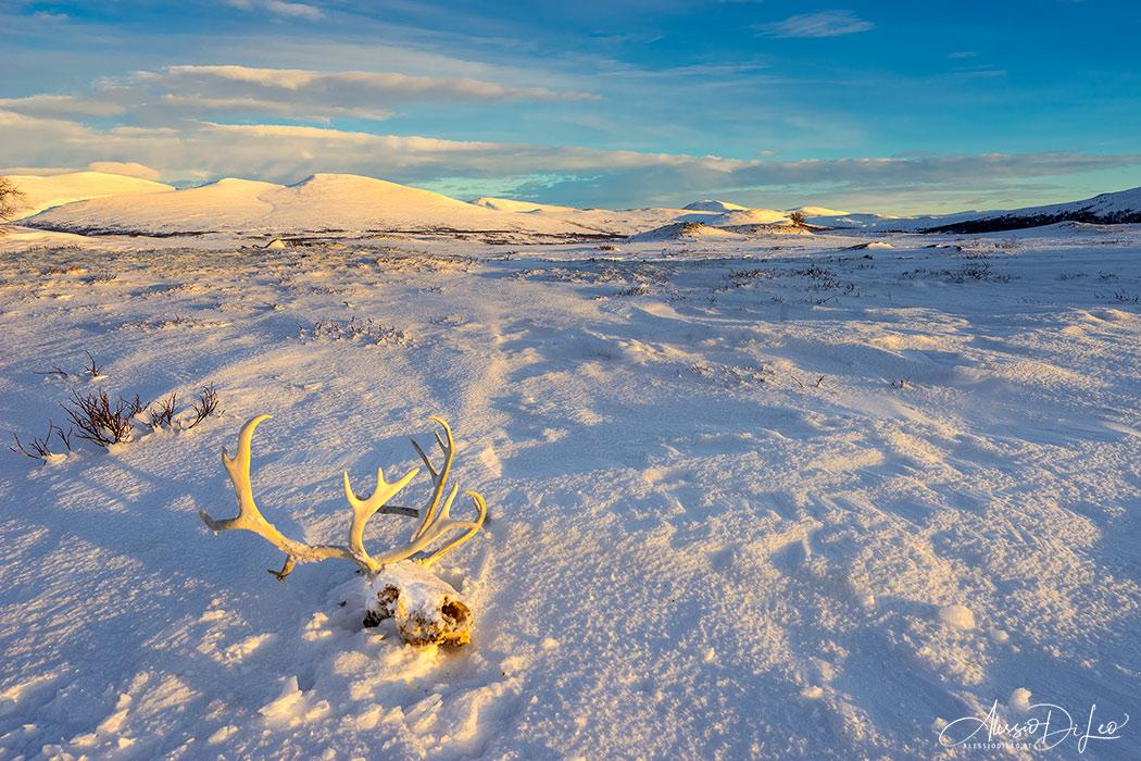 Tundra norvegia